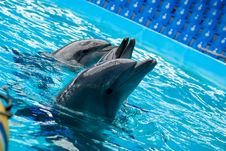 Free Dolphins Royalty Free Stock Photography - 51017377