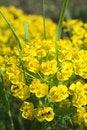 Free Yellow Flowers Royalty Free Stock Photos - 5113218