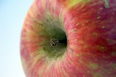Free Apple And Stalk Stock Image - 5110211