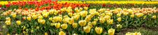 Free Colors Of Spring Stock Photos - 5110563