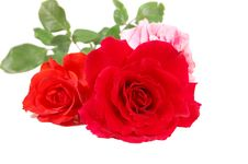 Free Red And Pink Roses Royalty Free Stock Images - 5110689