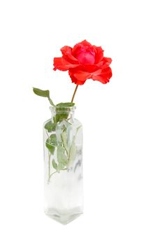 Free Red Rose In A Small Vase Royalty Free Stock Image - 5110716