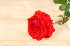 Free Red Rose Stock Images - 5110794