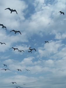 Free Seagulls Royalty Free Stock Image - 5110916