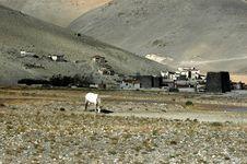 Free A Tibet Mountainous Village Stock Photography - 5111582