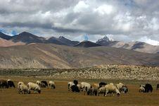Free Tibetan Plateau Grassland Stock Photography - 5111622