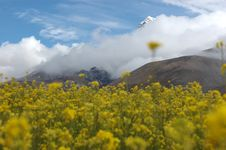 Free The Flowers Under The Snow Mountain Stock Image - 5111881