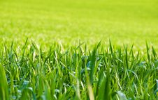 Free Green Grass Stock Photo - 5112500