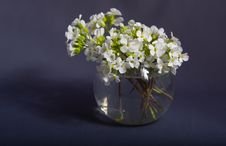 Free Bouquet Of  Flowers Royalty Free Stock Image - 5113986