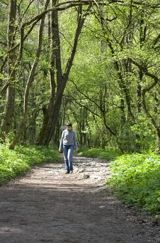 Walk In The Forest Royalty Free Stock Photos