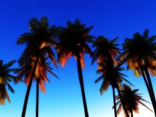 Free Wild Palms Stock Photos - 5115813