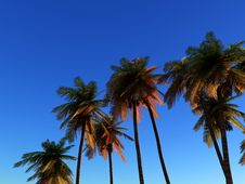 Free Wild Palms 2 Stock Photos - 5115823
