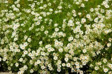 Free Flowerbed Stock Images - 5115844