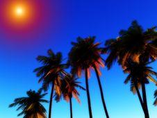 Free Wild Palms 5 Stock Image - 5115871