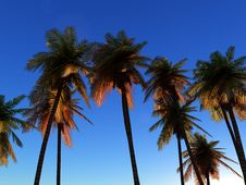 Free Wild Palms 4 Stock Photo - 5115890