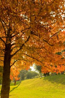 Free Autumn Tree Royalty Free Stock Photos - 5115908