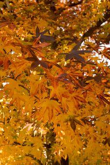 Free Autumn Tree Stock Photos - 5115953