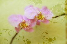 Free Orchids Stock Photography - 5119272