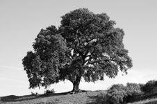 Free Mighty Tree Stock Photography - 5119282