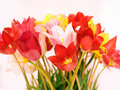 Free Wild Red, Pink And Yellow Tulips Royalty Free Stock Images - 5122419