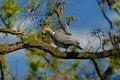 Free Pigeon Stock Photo - 5123090