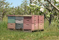 Free Bee Hives Stock Images - 5123814