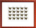 Free Butterfly Case Stock Photo - 5126860
