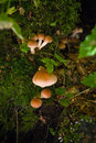 Free Mushroom 2 Royalty Free Stock Photography - 5129187
