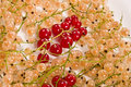 Free Currant Royalty Free Stock Image - 5129446