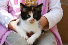 Free European Kitten Stock Photos - 5121583