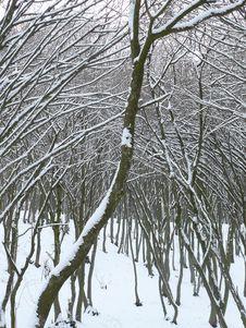 Free Snowy Arch Stock Photos - 5122013