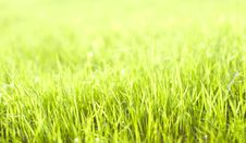 Free Green Vibrant Bright Grass Stock Images - 5122114
