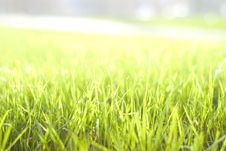 Free Green Vibrant Bright Grass Royalty Free Stock Photos - 5122138