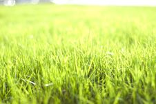 Free Green Vibrant Bright Grass Royalty Free Stock Image - 5122186