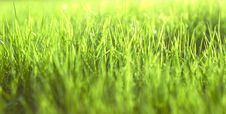 Free Green Vibrant Bright Grass Royalty Free Stock Images - 5122229