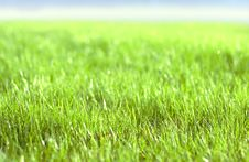 Free Green Vibrant Bright Grass Royalty Free Stock Image - 5122246