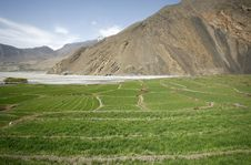Free Panorama View Of Green Paddy Fileds Stock Photography - 5122312