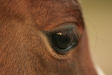 Free Horse S Eye Royalty Free Stock Photo - 5122415