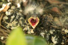 Free Baby Bird. Stock Photo - 5122500
