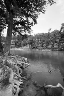 Free Cedar Tree On Guadalupe River Stock Image - 5123141
