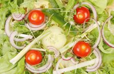 Free Salad Stock Photos - 5123173