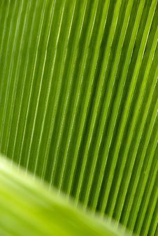 Free Leaf Veins Royalty Free Stock Photography - 5123377