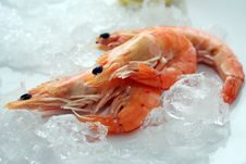 Free Shrimps Stock Photography - 5125952