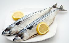 Free Fishes Stock Images - 5126024