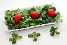 Free Fresh Salad Stock Photo - 5126070