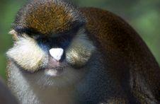 Free Monkey Royalty Free Stock Photo - 5126485