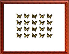 Butterfly Case Stock Photo