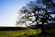 Free Oak Tree Stock Photos - 5127643