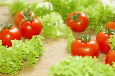 Free Fresh Salad With Tomatoes Stock Photos - 5127683
