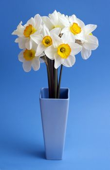 Free Narcissus. Stock Image - 5127831